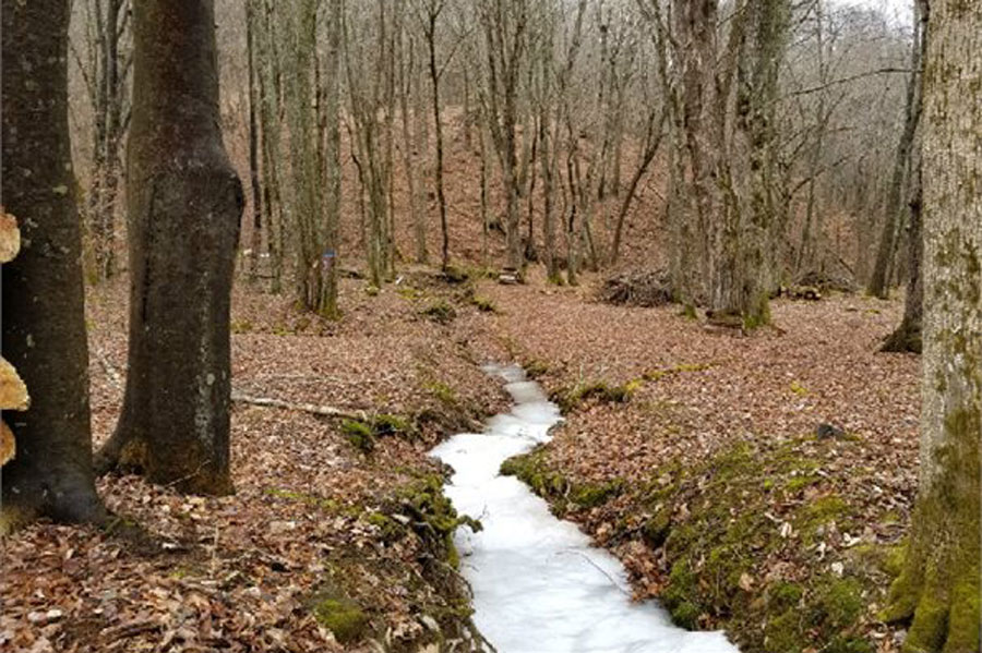 Boone watauga county nc land for sale 15 acres for Laurel springs